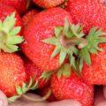 Как и когда подкармливать клубнику для укрупнения ягоды