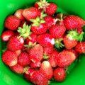 Как ухаживать за клубникой после плодоношения