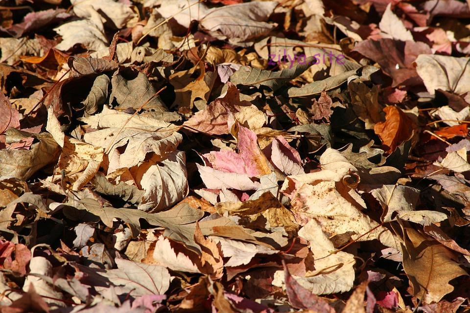 Рекомендации о том, как мульчировать клубнику скошенной травой