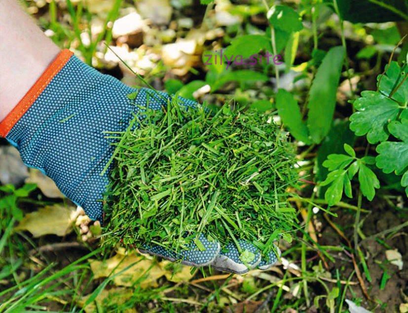 Как мульчировать клубнику скошенной травой