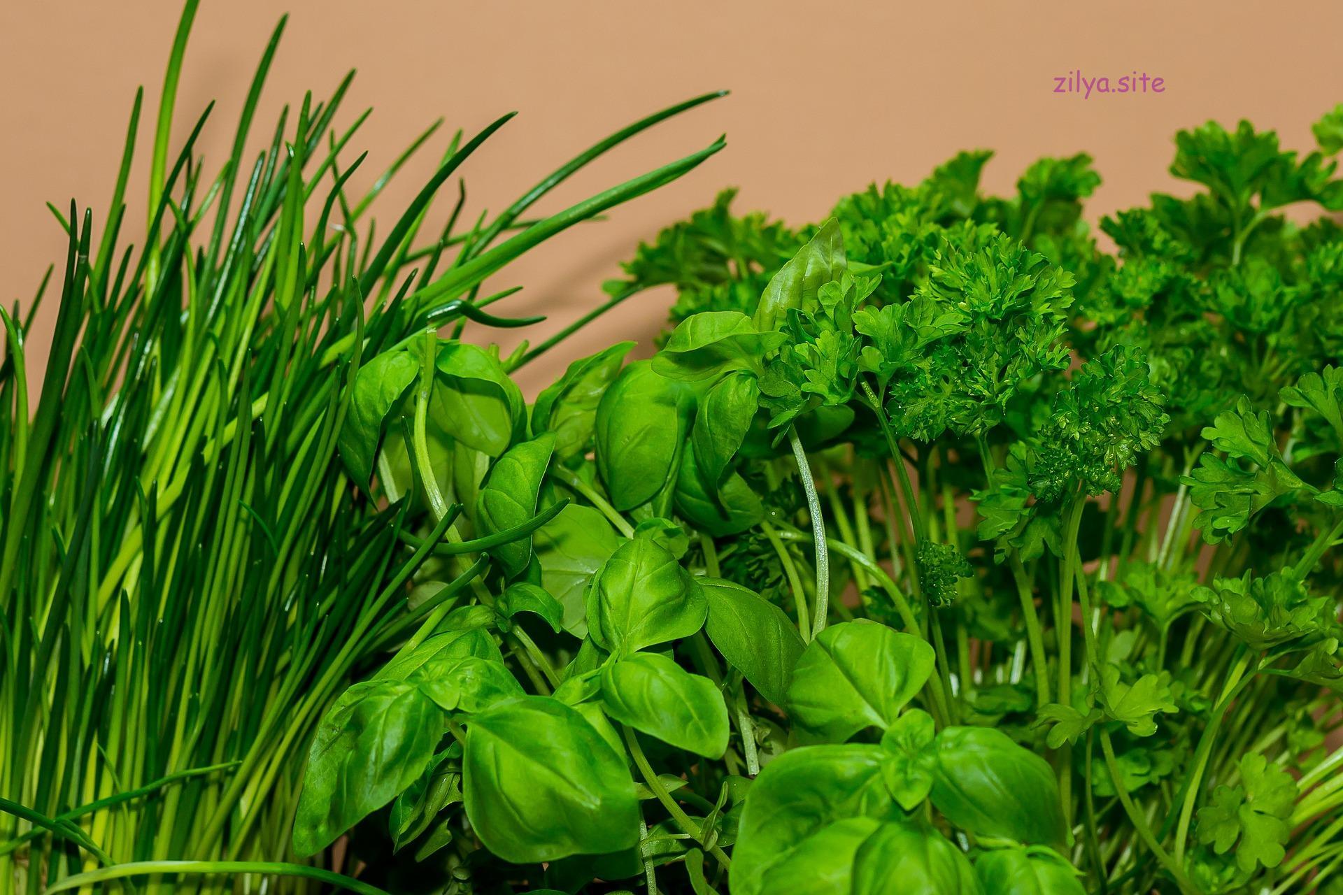 Советы о том, как правильно подготовить место для осенней посадки клубники