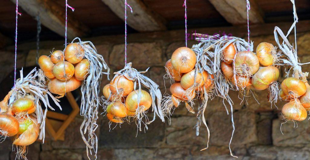 Советы о том как правильно сушить лук после уборки с грядки