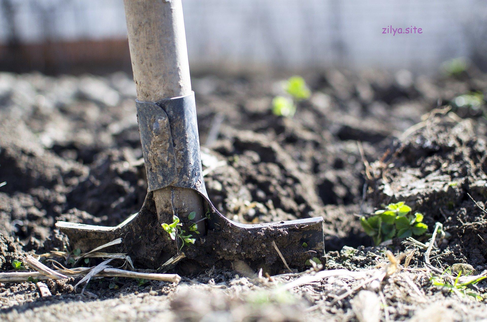 Советы новичкам о том, как повысить плодородие почвы под клубникой
