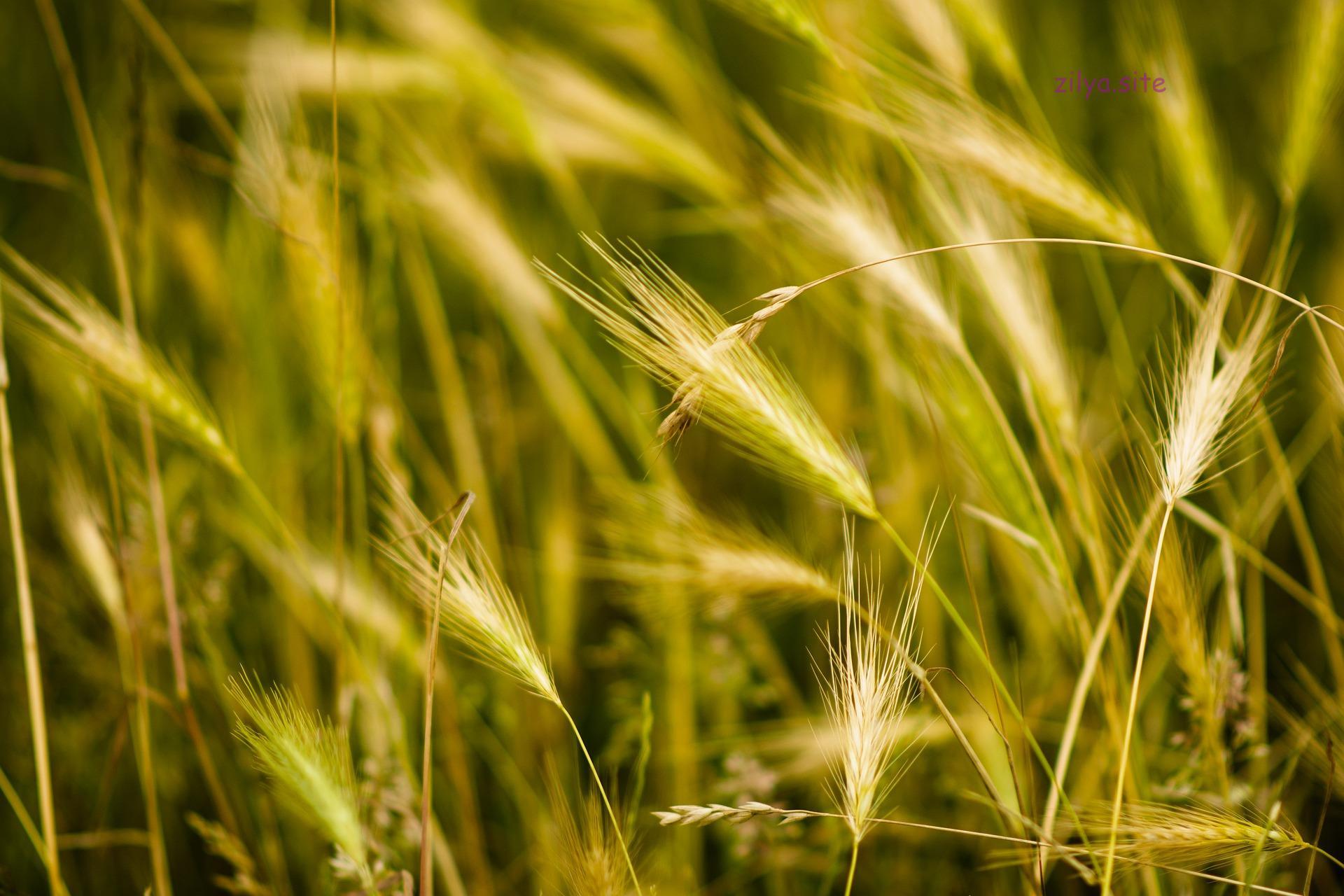 Как повысить плодородие почвы под клубникой