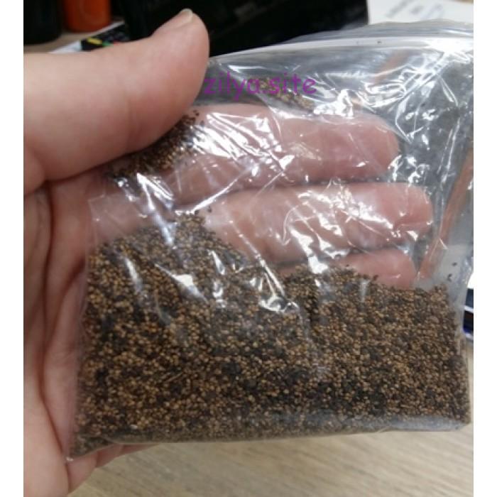 Как самостоятельно приготовить семена клубники