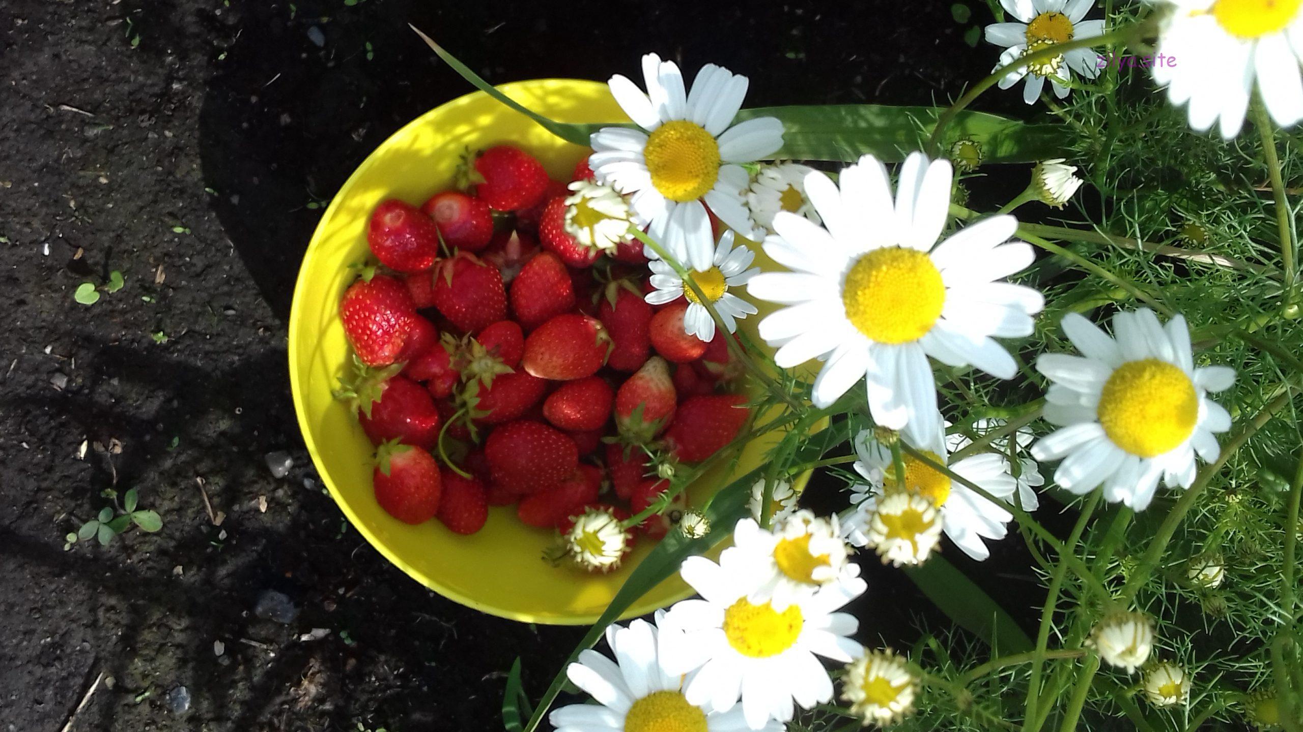 Как можно увеличить урожай клубники на своём участке